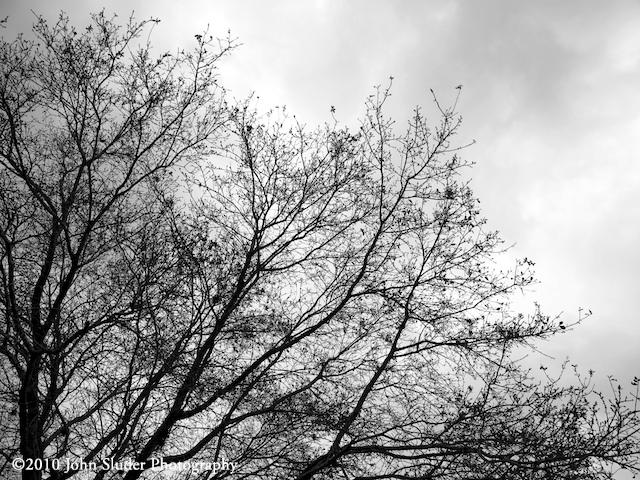 dull spring time morning
