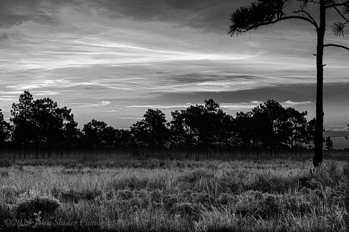 Florida Wetlands in the Bull Creek WMA